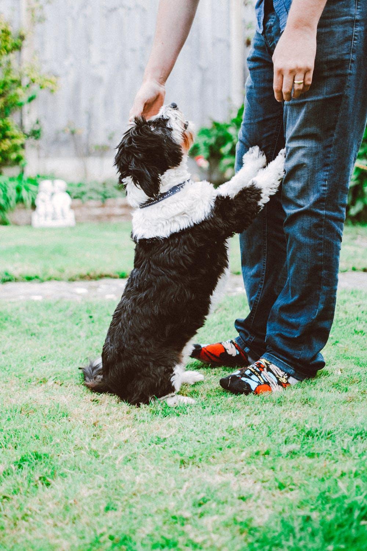 Hund som hälsar