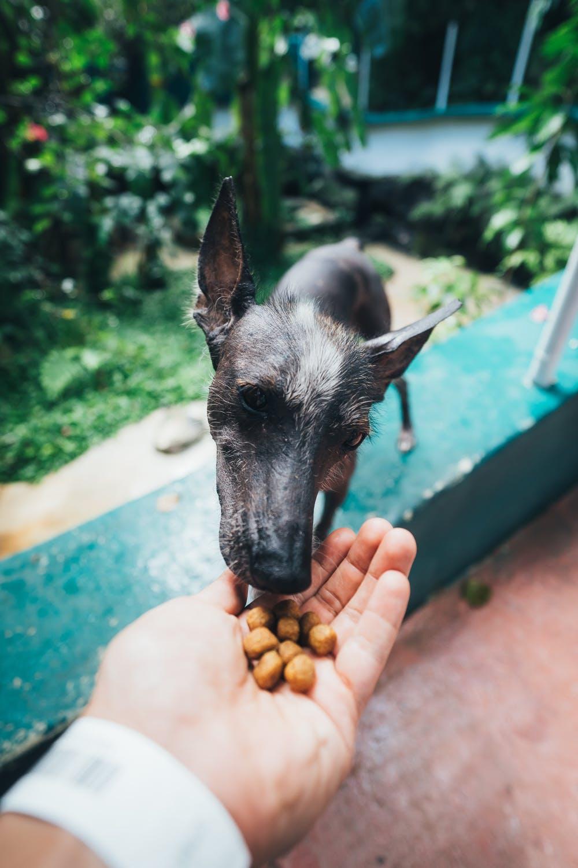Hund som blir matad